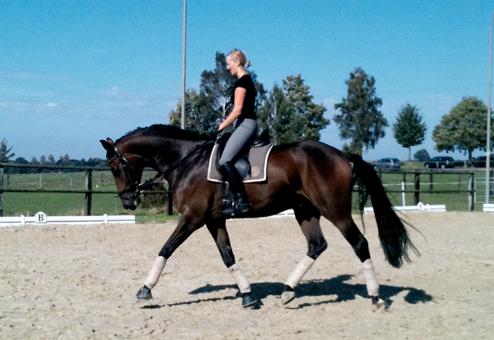 Pferd_neu_Foto1